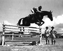 Pferd bei Sprung